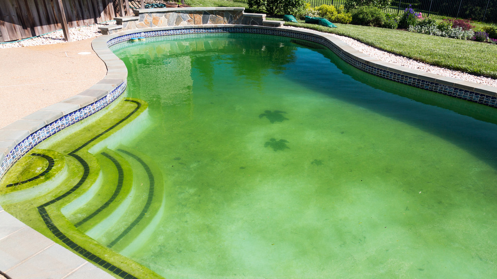 Algen im Pool entfernen und grünes Wasser wieder klar bekommen